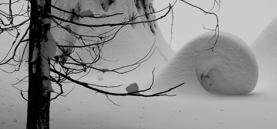 Snow in Sequoia